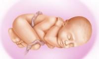 42 неделя беременности