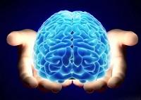 Сколько весит мозг