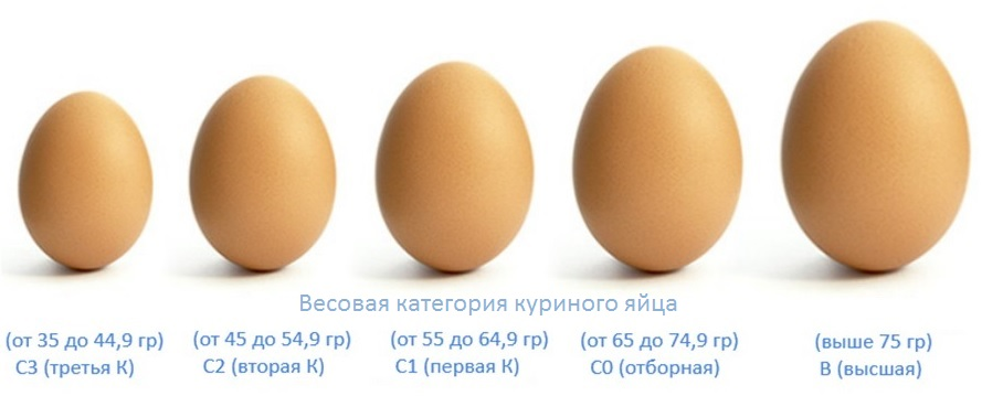 Сколько весит одно яйцо