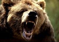 Сколько весит медведь гризли