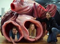 Сколько весит сердце кита