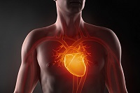 Сколько весит сердце человека