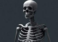 Вес скелета человека